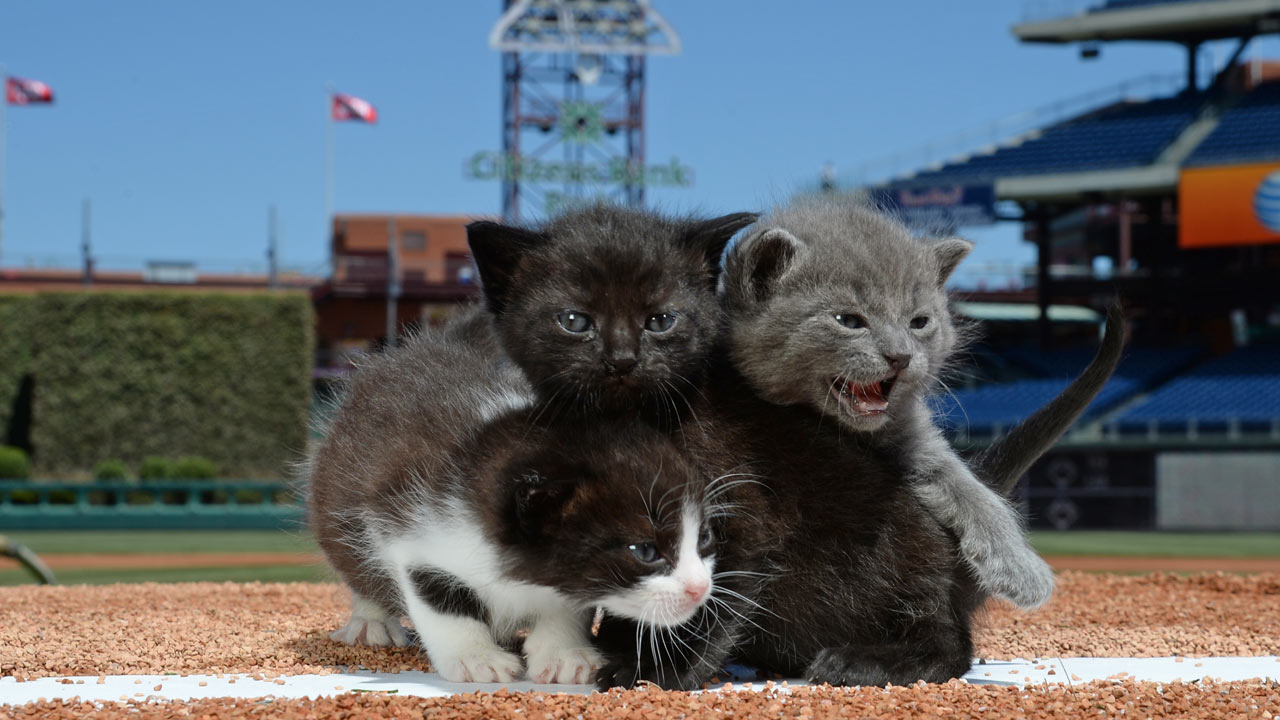 Phillies' ballpark goes to the cats and dogs