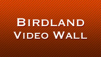 Birdland Video Wall