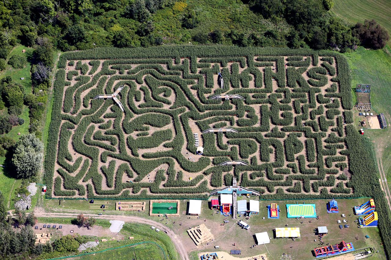 Image result for big papi corn maze
