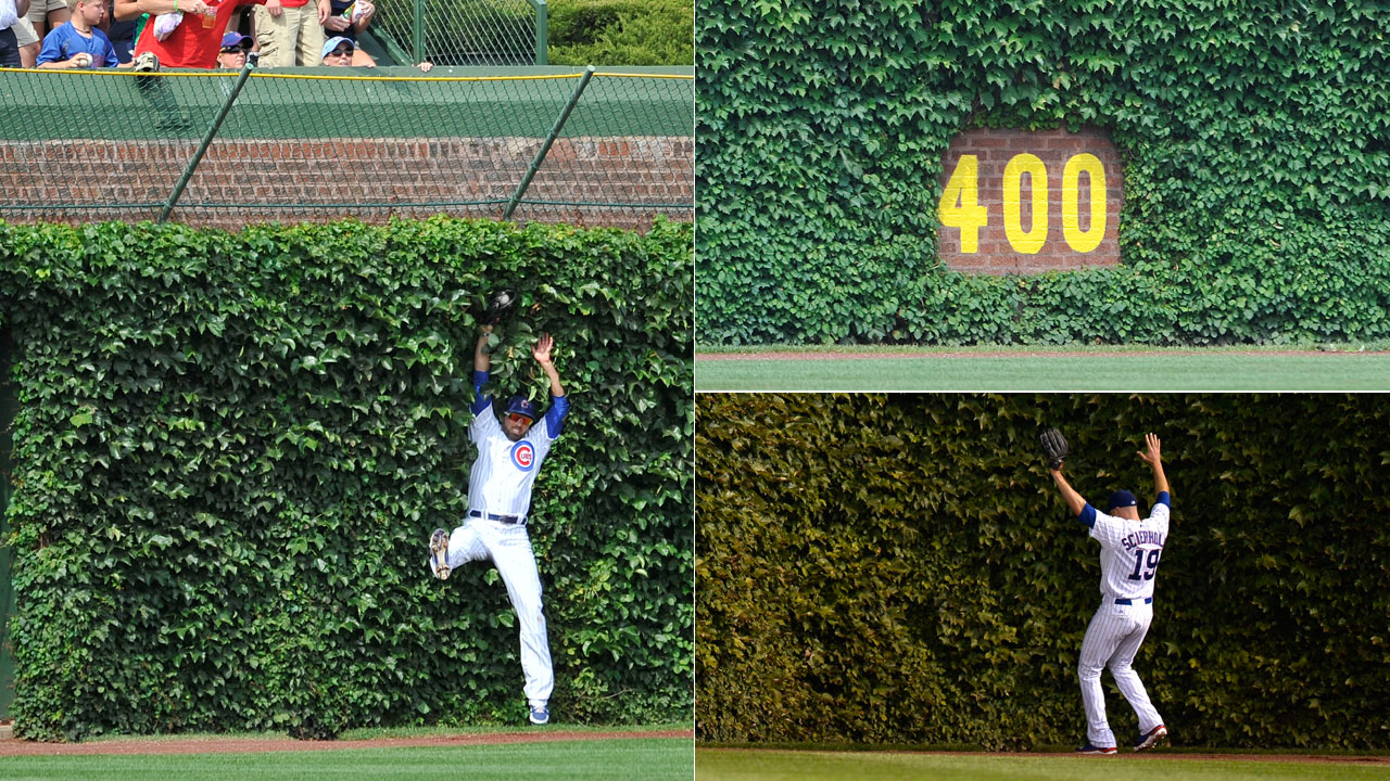 Ivy helps give Wrigley Field iconic look