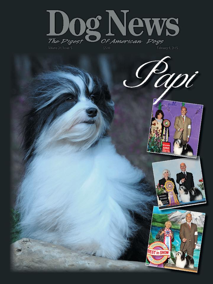 Comparing Big Papi To Papi The Havanese Champion Dog Mlb Com