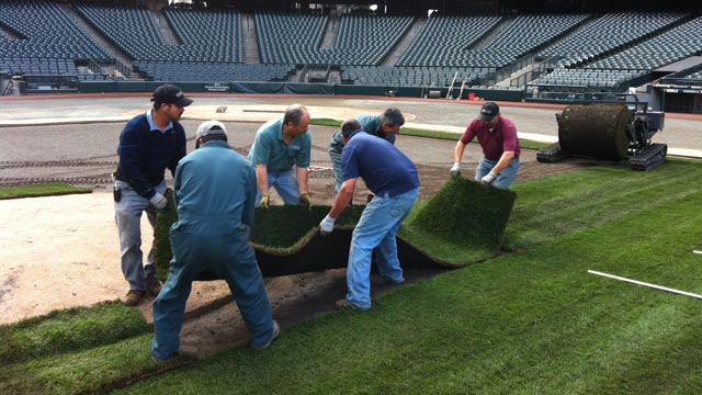 Mariners protect home turf by replacing it