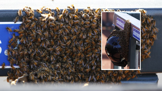 D-backs-Giants tilt delayed by swarm of bees