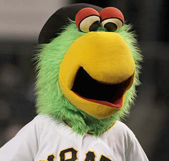Pirate Parrot Photo