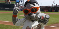 Lou Seal Appearance